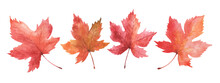 Set Of Watercolor Autumn Maple Leaves