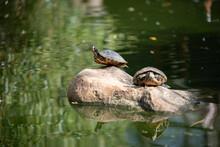 Perfectly Balanced Turtle :)