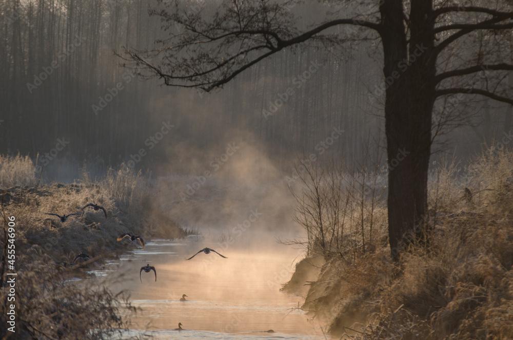 Mgła unosząca się znad wody, zimą o wschodzie słońca w salonie
