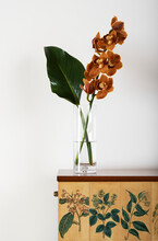 Cymbidium Commonly Known As Boat Orchids In Glass Vase With Large Green Tropical Plant Leaf On Cabinet