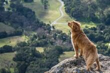 Brown Dog On Gray Rock Near Green Landscape