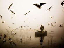 Man Riding Paddle Boat Surrounded By Birds In A Pond