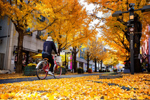 Person Riding A Bike On A Sidewalk Covered With Yellow Tree Leaves