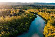 River Surrounded By Tropical Trees
