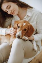 Woman Caressing A Beagle Dog