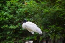 Wood Stork Beside Tree