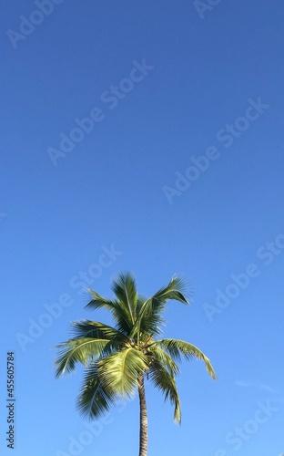Canvas Print beautiful palm tree on the beach of Haiti