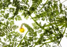 シダ、葉、緑、黄色、二つ星、テントウムシ、小さい世界、