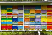 Bee Hive In Vipavska Dolina In Slovenia