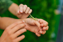Mantis On The Hand Of A Man. Insect Pest. Nature.