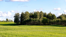 Landscape With Green Grass And Forest In Distance, Blue Sky With White Fluffy Clouds In Latvia