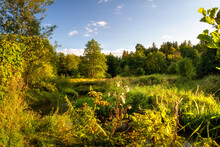 Evening Landscape Of Nature. Narrow River Overgrown With Grass. Sunset Above Forest. Sunbeams From Evening Sun.Walk Near River.