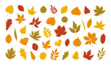 Autumn Leaves Set - Maple, Oak, Acacia, Linden, Birch, Ginkgo And Others. Fall Foliage In Yellow, Red, Orange, Green Colors. Vector Illustration.