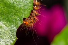 Raupe Frisst An Einer Blume