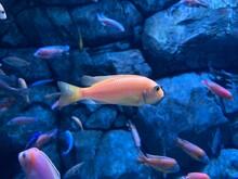 Aquarium Fish Sea Ocean Salt Water Excursion Aquarium Aquarium Keeping Therarium Sand Corals Bottom Under Water