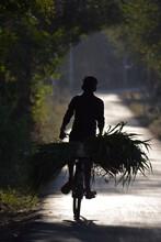 Silhouette Of Man Riding A Bike Transferring Green Leaf