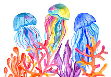 Watercolor Jellyfish, Algae And Corals Izolated On White Background. Hand Painting Under The Water Illustration.