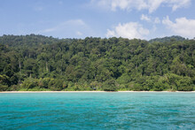 Green Tropical Trees Growing On Shore Of Blue Sea