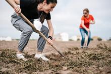 Women Digging Soil In Field