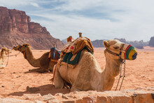 Camels Resting Near High Stone Hills In Desert And Cloudy Sky