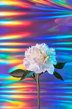 White Peony With Holographic Foil