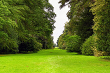 Long Avenue Of Mature Trees In A Natural Parkland Setting. No People.
