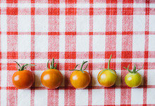 A Rainbow Of Tomato Colors
