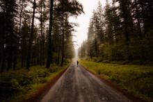Un Hombre Pasea Por Un Bosque De Pinos Verdes En Goikomendi, País Vasco. A Man Walking Along A Green Pine Forest In Goikomendi, Basque Country