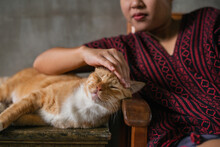 Woman Stroking The Cat's Head