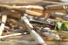 Closeup Shot Of A Small Snake Near Dry Tree Branches On The Ground