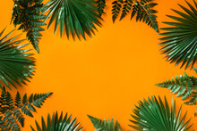 Green Leaves Arranged With Orange Background