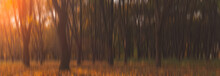Blurry Nature Concept Panoramic Landscape Background Photography Of Dramatic Autumn Season In October Dusk Park Outdoor Zone With Sunset Orange Lighting And Empty Copy Space