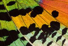Colorful Moth Wing, Macro