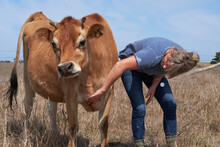 Woman Petting Her Jersey Cow
