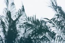 Palm Frond Leaf Shadows