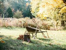 Old Rusty Wheelbarrow Sitting In Meadow With Tools