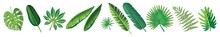 Set Of Tropical Leaves. Leaf, Growth, Palm, Silhouette, Foliage, Illustration, Isolated, Set, Tropical, Botany, Decoration, Design. Green Tropical Leaves. Tropical Leaves Design.