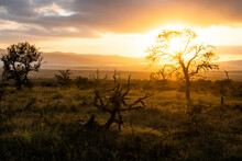 Dawn Sunlight Filtering Through Dead Leadwood Trees