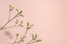 Little White Flower, Detail Of A Gipsofila Flower On Pink Background With Copy Space For Your Design, Light And Dark Shadows