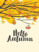 Vector Banner With The Inscription Hello Autumn And Branches Of Rowan Tree. Decorative Autumn Illustration In Flat Style With Yellowed Foliage And Ripe Red Rowan Berries On A Light Background