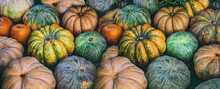 Variety Of Pumpkins Orange, Green And Yellow Autumn Vegetable Pattern