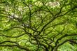 canvas print picture - Exotische Bäume im chinesischen Garten