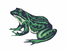 Green Frog In Vintage Style Isolated On White Background