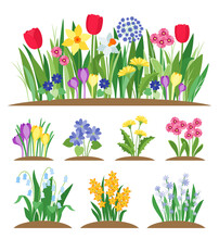 Spring Garden Flowers. Grass And Plant. Early Spring Flowering Vector