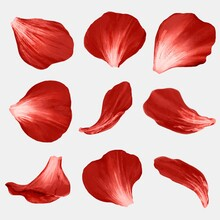 Flower Petals Element Vector Set Red Rose