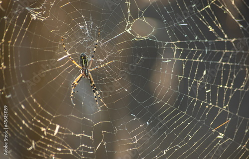 Canvas Print Background of the threads of a spider web with dew drops