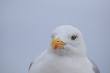 Portrait Of A Seagull Sitting At The Beach