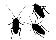 Insect Pests Cockroaches In The Set. Vector Image.