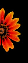 Orange Flower On Black Background