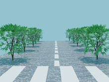 道と街路樹と横断歩道の背景風景background